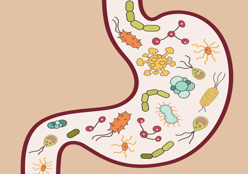 Vi Khuan Helicobacter Pylori Hp La Gi